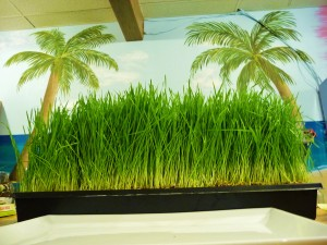 Org Juice Bar with Org Wheatgrass